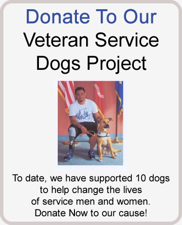 service-dogs